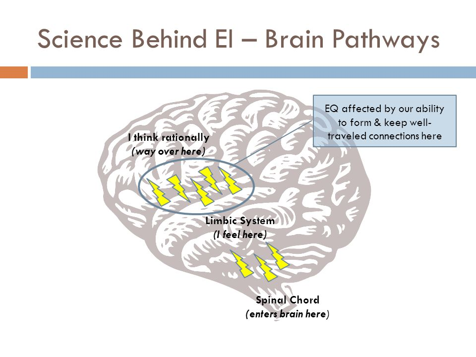 Science Behind EI – Brain Pathways Spinal Chord (enters brain here) Limbic System (I feel here) I think rationally (way over here) EQ affected by our ability to form & keep well- traveled connections here