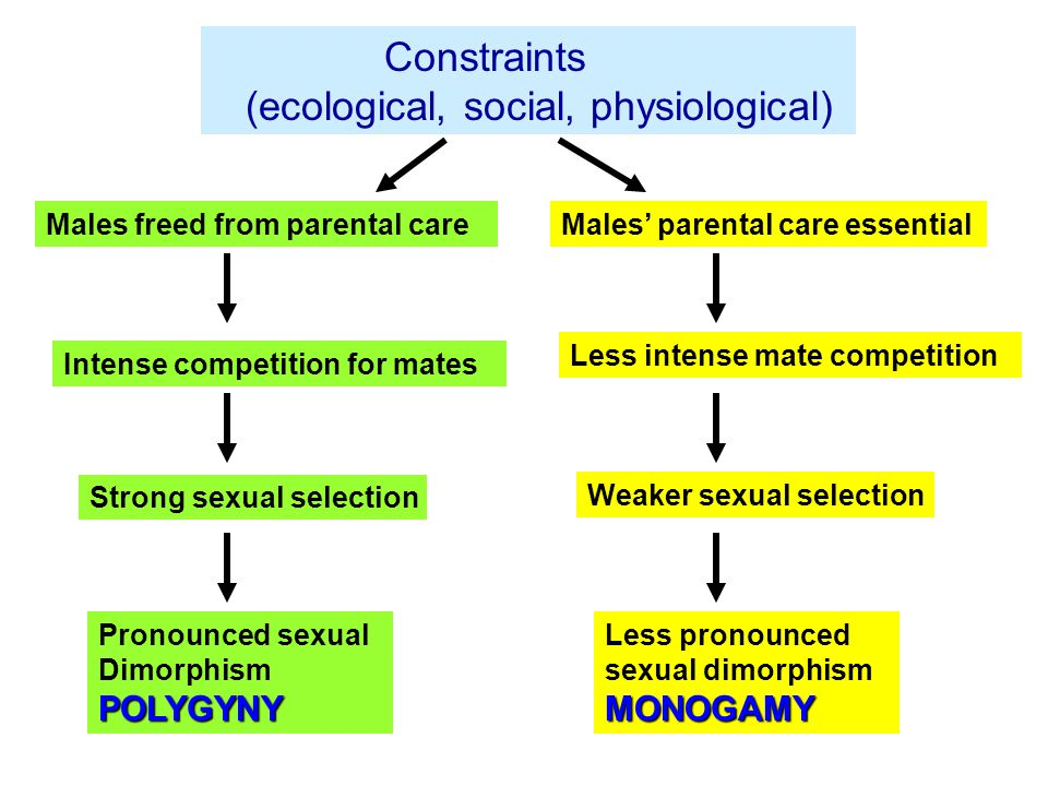 Males freed from parental careMales' parental care essential Intense competition for mates Less intense mate competition Strong sexual selection Weaker sexual selection Pronounced sexual DimorphismPOLYGYNY Less pronounced sexual dimorphismMONOGAMY Constraints (ecological, social, physiological)