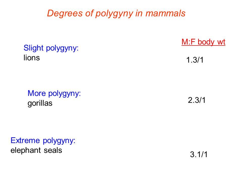 Degrees of polygyny in mammals Slight polygyny: lions More polygyny: gorillas Extreme polygyny: elephant seals 1.3/1 2.3/1 3.1/1 M:F body wt