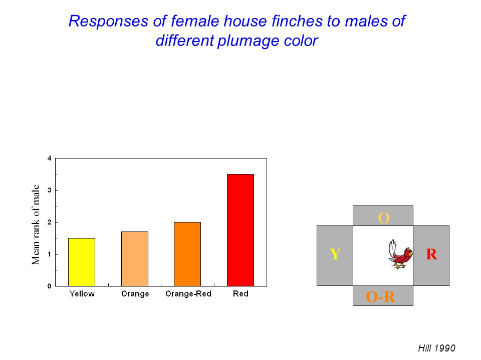 Responses of female house finches to males of different plumage color Mean rank of male Hill 1990 O R O-R Y O