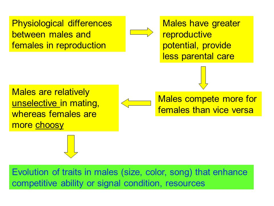 Physiological differences between males and females in reproduction Males have greater reproductive potential, provide less parental care Males compete more for females than vice versa Males are relatively unselective in mating, whereas females are more choosy Evolution of traits in males (size, color, song) that enhance competitive ability or signal condition, resources