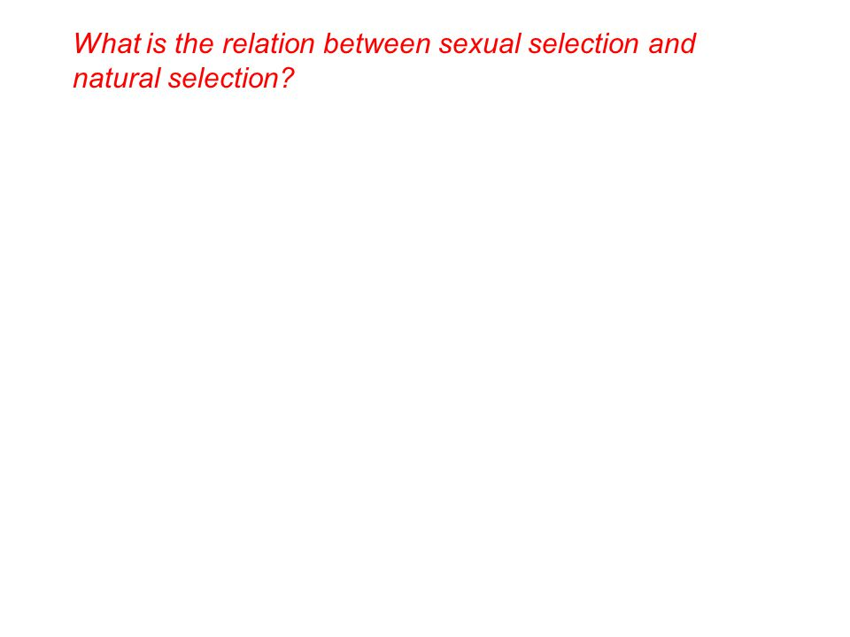 What is the relation between sexual selection and natural selection
