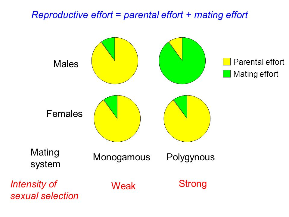 Parental effort Mating effort Males Females Mating system Intensity of sexual selection MonogamousPolygynous Weak Strong Reproductive effort = parental effort + mating effort