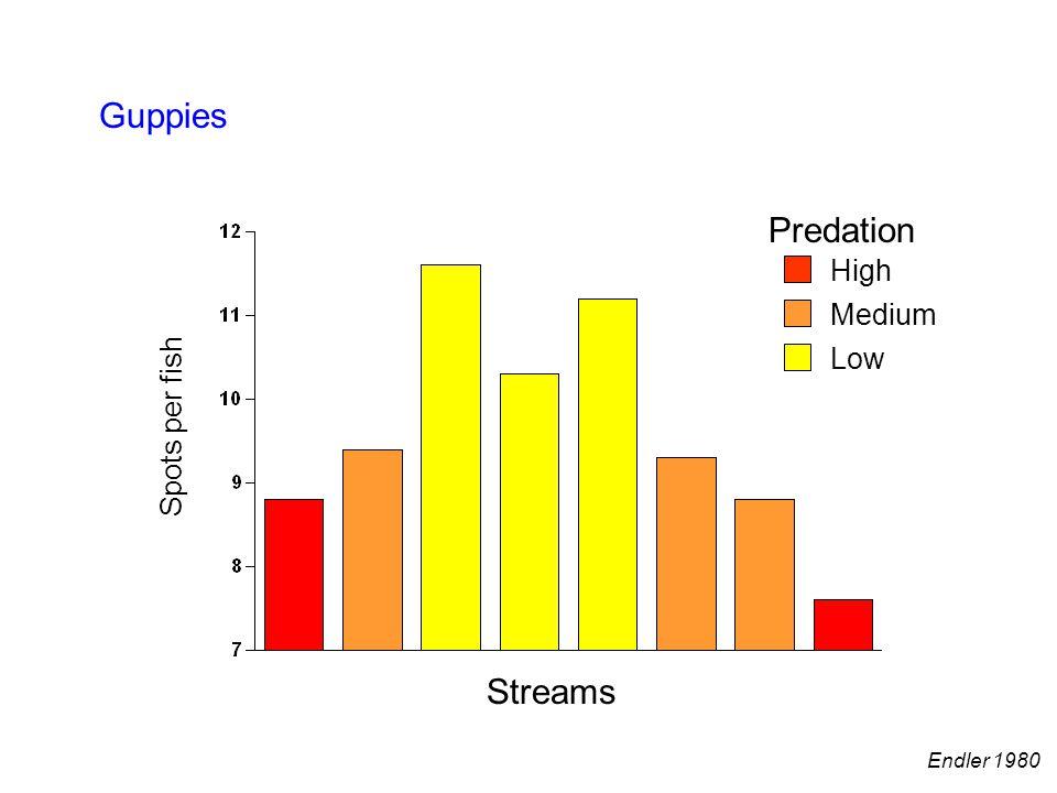 Predation High Medium Low Guppies Streams Spots per fish Endler 1980