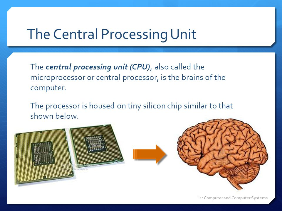 The Central Processing Unit The central processing unit (CPU), also called the microprocessor or central processor, is the brains of the computer. The