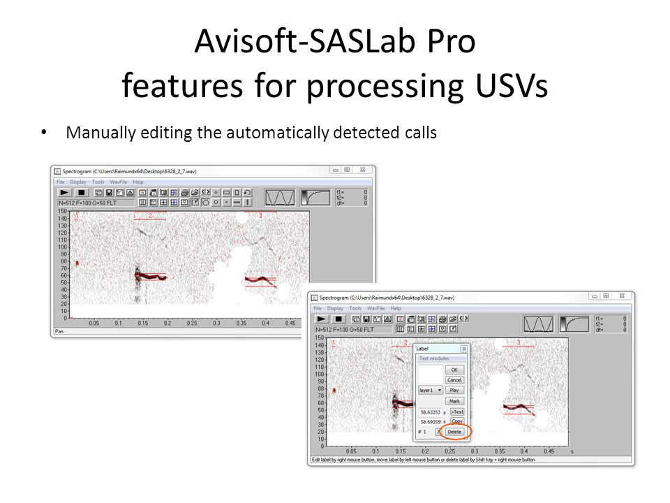 Avisoft-SASLab Pro features for processing USVs Exporting measurements to Excel
