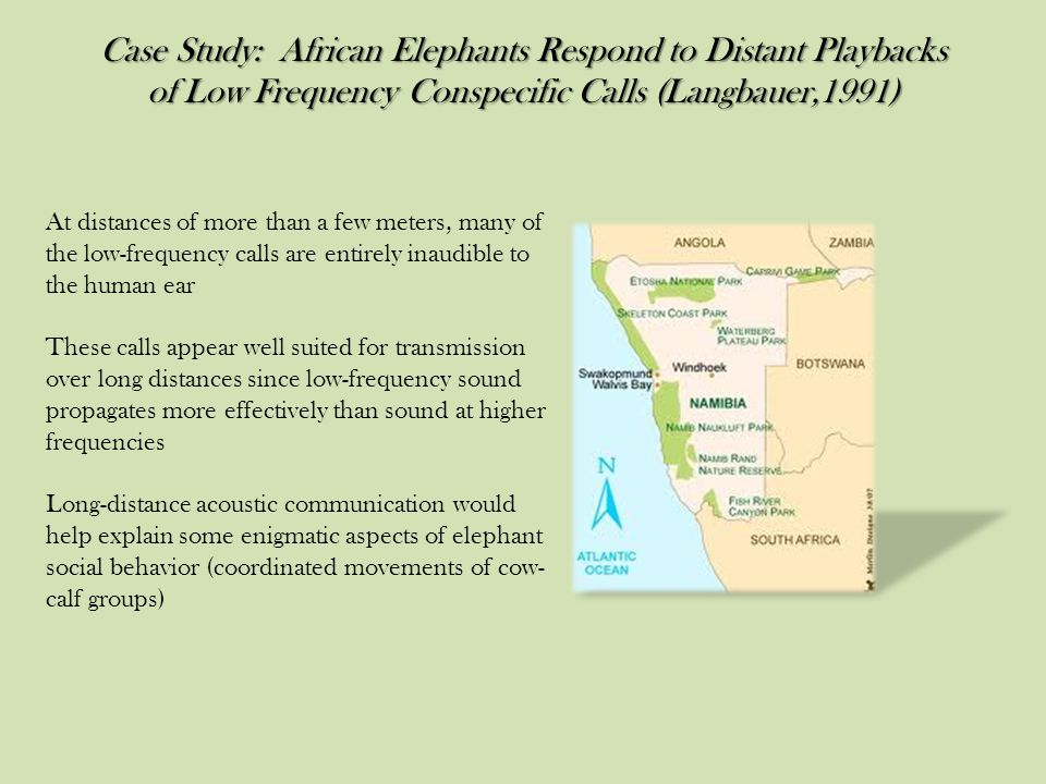 Case Study: African Elephants Respond to Distant Playbacks of Low Frequency Conspecific Calls (Langbauer,1991) At distances of more than a few meters, many of the low-frequency calls are entirely inaudible to the human ear These calls appear well suited for transmission over long distances since low-frequency sound propagates more effectively than sound at higher frequencies Long-distance acoustic communication would help explain some enigmatic aspects of elephant social behavior (coordinated movements of cow- calf groups)