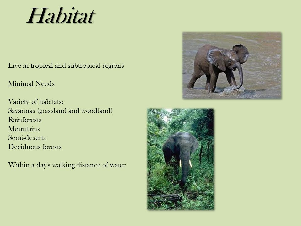 Habitat Live in tropical and subtropical regions Minimal Needs Variety of habitats: Savannas (grassland and woodland) Rainforests Mountains Semi-deserts Deciduous forests Within a day s walking distance of water