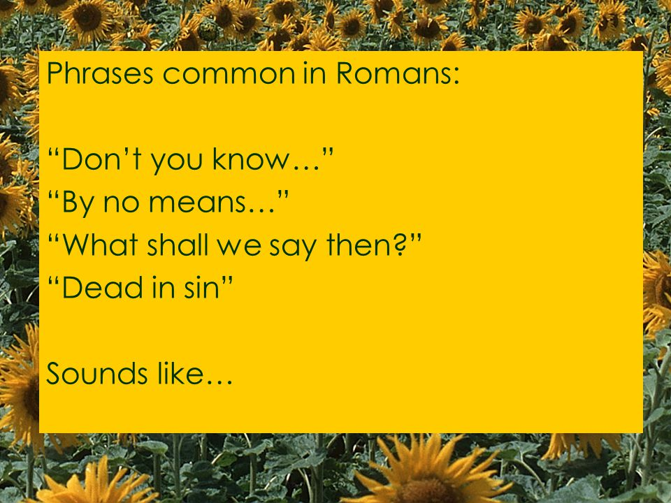 Phrases common in Romans: Don't you know… By no means… What shall we say then Dead in sin Sounds like…