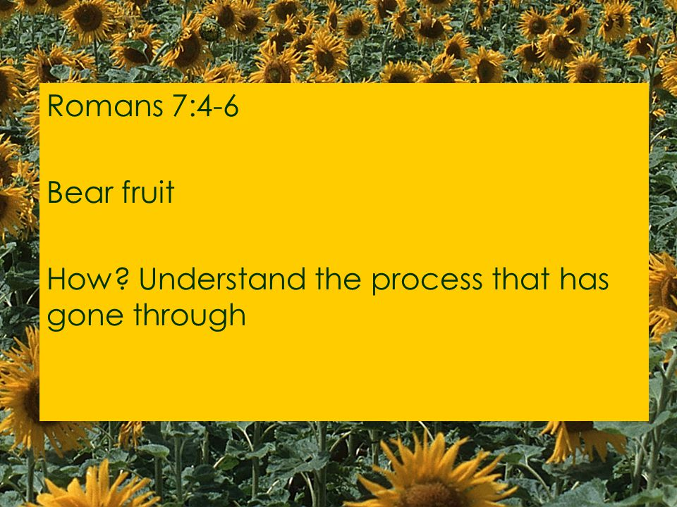 Romans 7:4-6 Bear fruit How Understand the process that has gone through