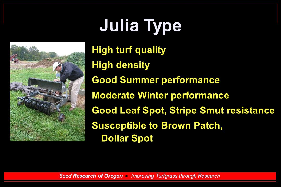 Seed Research of Oregon Improving Turfgrass through Research Julia Type High turf quality High density Good Summer performance Moderate Winter performance Good Leaf Spot, Stripe Smut resistance Susceptible to Brown Patch, Dollar Spot