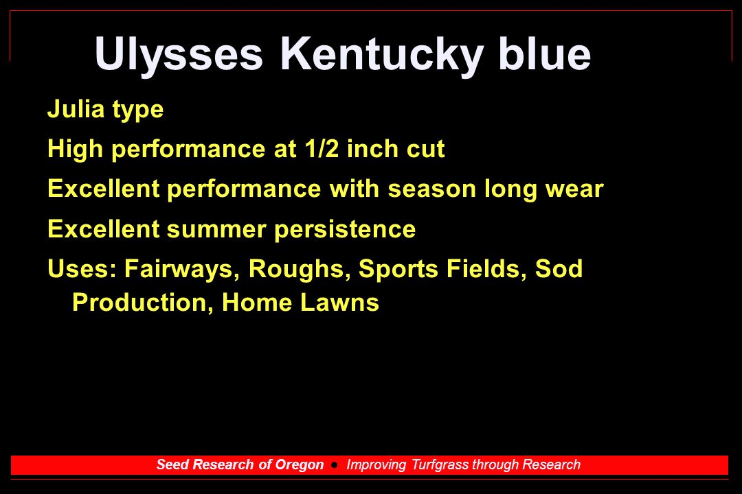 Seed Research of Oregon Improving Turfgrass through Research Ulysses Kentucky blue Julia type High performance at 1/2 inch cut Excellent performance with season long wear Excellent summer persistence Uses: Fairways, Roughs, Sports Fields, Sod Production, Home Lawns