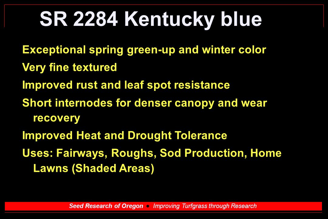 Seed Research of Oregon Improving Turfgrass through Research SR 2284 Kentucky blue Exceptional spring green-up and winter color Very fine textured Improved rust and leaf spot resistance Short internodes for denser canopy and wear recovery Improved Heat and Drought Tolerance Uses: Fairways, Roughs, Sod Production, Home Lawns (Shaded Areas)