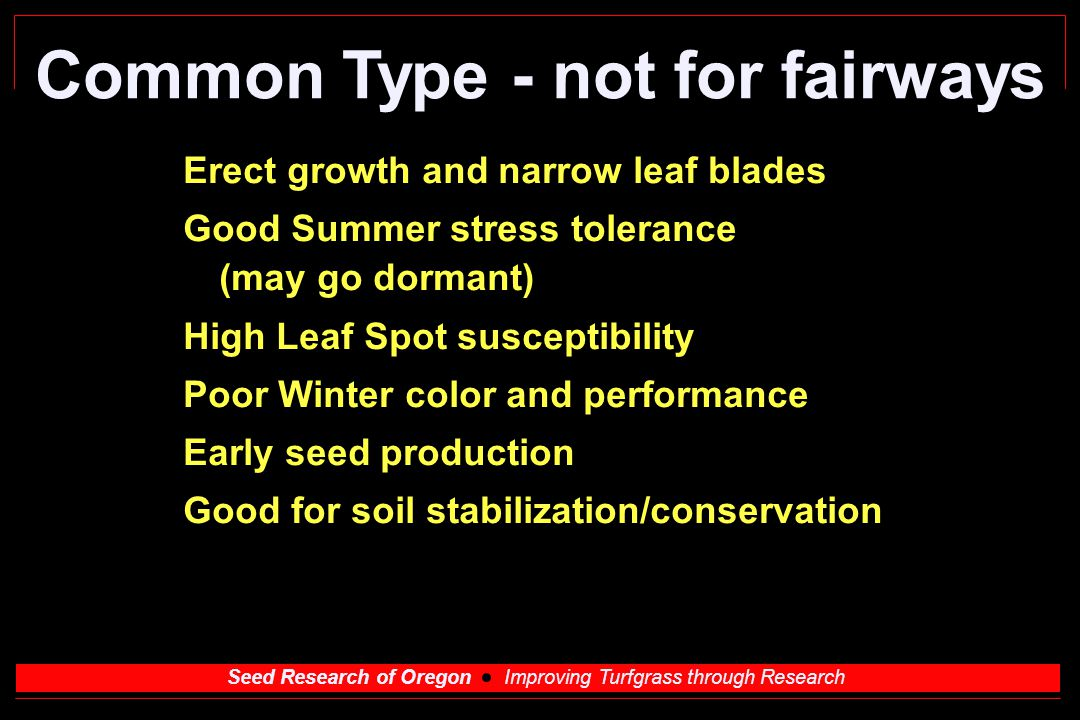 Seed Research of Oregon Improving Turfgrass through Research Common Type - not for fairways Erect growth and narrow leaf blades Good Summer stress tolerance (may go dormant) High Leaf Spot susceptibility Poor Winter color and performance Early seed production Good for soil stabilization/conservation