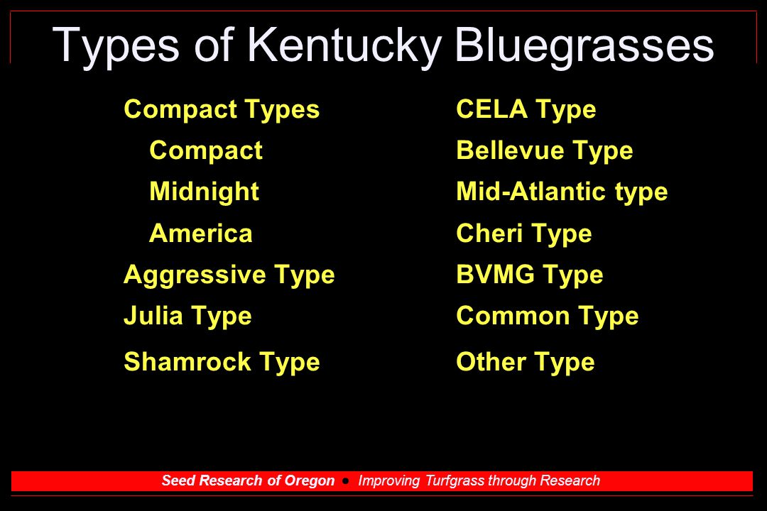 Seed Research of Oregon Improving Turfgrass through Research Types of Kentucky Bluegrasses Compact TypesCELA Type CompactBellevue Type MidnightMid-Atlantic type AmericaCheri Type Aggressive TypeBVMG Type Julia TypeCommon Type Shamrock TypeOther Type