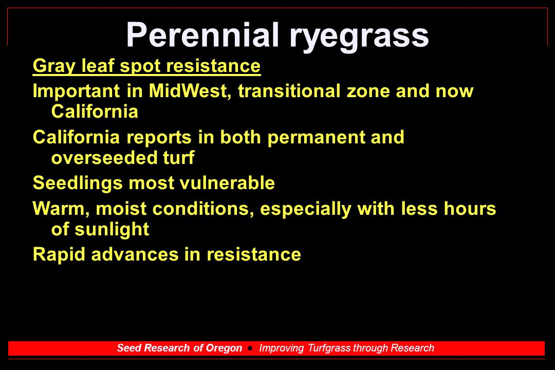 Seed Research of Oregon Improving Turfgrass through Research Perennial ryegrass Gray leaf spot resistance Important in MidWest, transitional zone and now California California reports in both permanent and overseeded turf Seedlings most vulnerable Warm, moist conditions, especially with less hours of sunlight Rapid advances in resistance