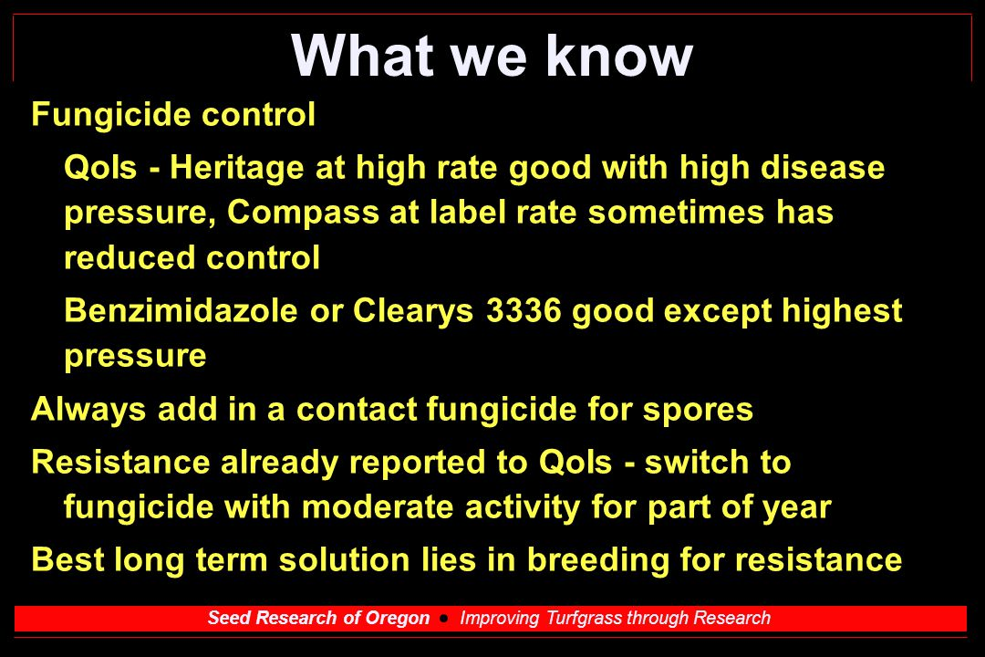 Seed Research of Oregon Improving Turfgrass through Research What we know Fungicide control QoIs - Heritage at high rate good with high disease pressure, Compass at label rate sometimes has reduced control Benzimidazole or Clearys 3336 good except highest pressure Always add in a contact fungicide for spores Resistance already reported to QoIs - switch to fungicide with moderate activity for part of year Best long term solution lies in breeding for resistance