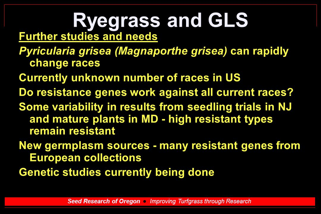 Seed Research of Oregon Improving Turfgrass through Research Genetic relationship in GLS