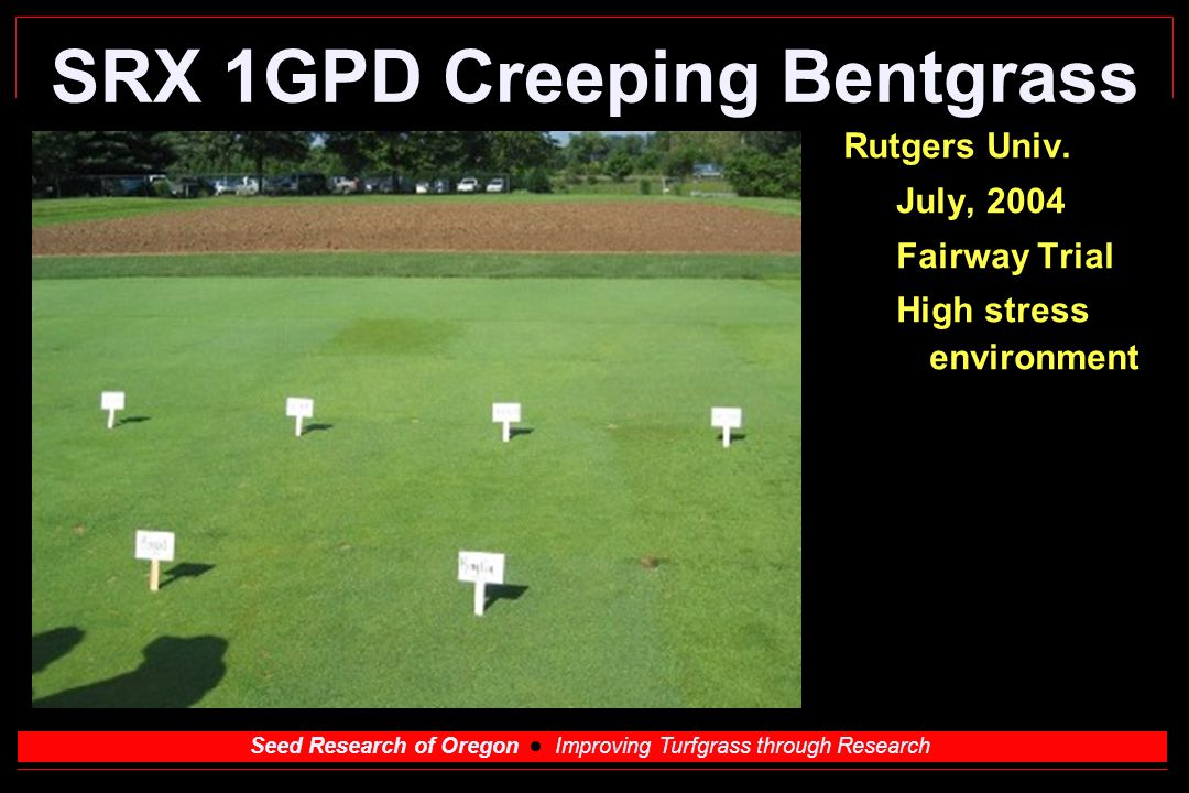 Seed Research of Oregon Improving Turfgrass through Research SRX 1PDH Creeping Bentgrass Dollar spot resistant.