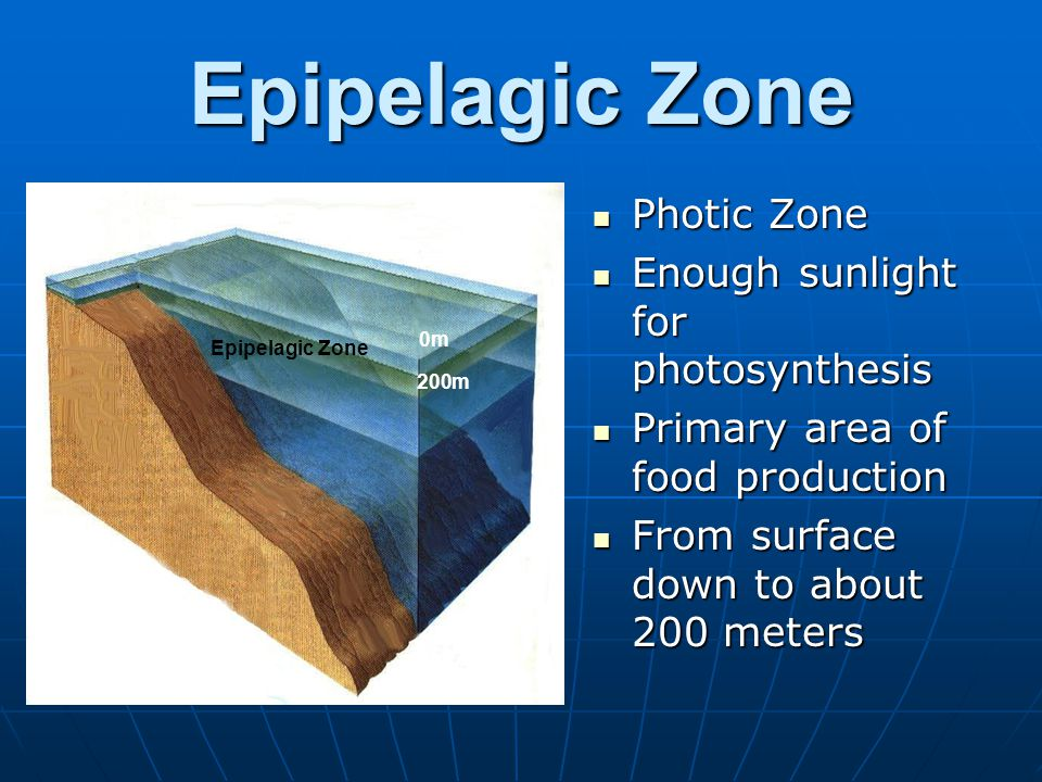 Epipelagic Zone Photic Zone Photic Zone Enough sunlight for photosynthesis Enough sunlight for photosynthesis Primary area of food production Primary