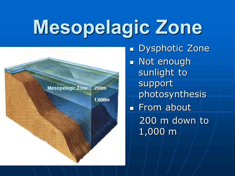 Mesopelagic Zone Dysphotic Zone Dysphotic Zone Not enough sunlight to support photosynthesis Not enough sunlight to support photosynthesis From about From about 200 m down to 1,000 m 200 m down to 1,000 m Mesopelagic Zone200m 1,000m