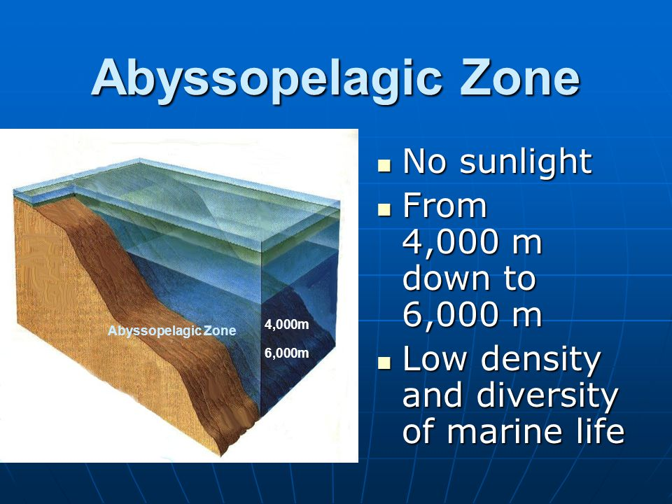 Abyssopelagic Zone No sunlight No sunlight From 4,000 m down to 6,000 m From 4,000 m down to 6,000 m Low density and diversity of marine life Low dens