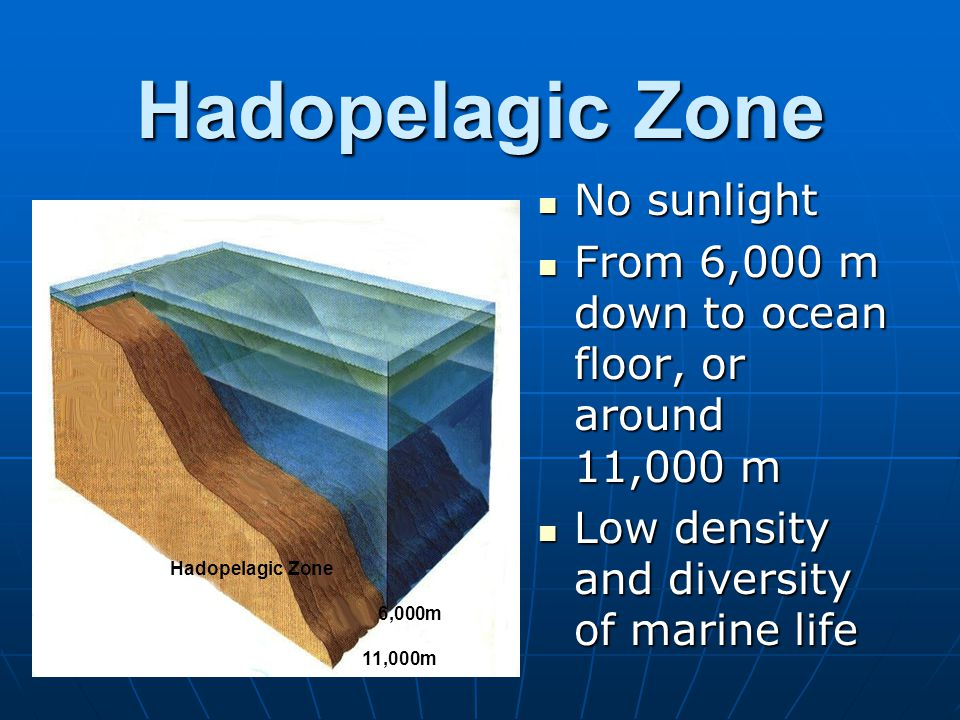 Hadopelagic Zone No sunlight No sunlight From 6,000 m down to ocean floor, or around 11,000 m From 6,000 m down to ocean floor, or around 11,000 m Low