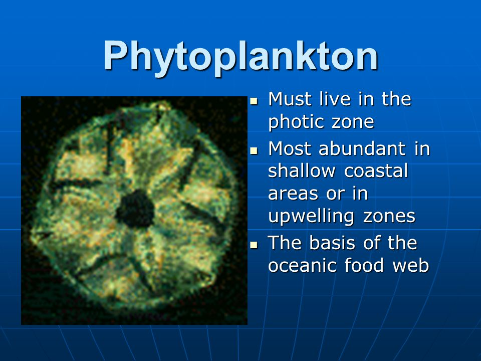 Phytoplankton Must live in the photic zone Must live in the photic zone Most abundant in shallow coastal areas or in upwelling zones Most abundant in