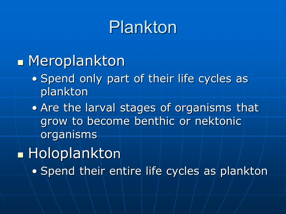 Plankton Meroplankton Meroplankton Spend only part of their life cycles as planktonSpend only part of their life cycles as plankton Are the larval stages of organisms that grow to become benthic or nektonic organismsAre the larval stages of organisms that grow to become benthic or nektonic organisms Holoplankto n Holoplankto n Spend their entire life cycles as planktonSpend their entire life cycles as plankton