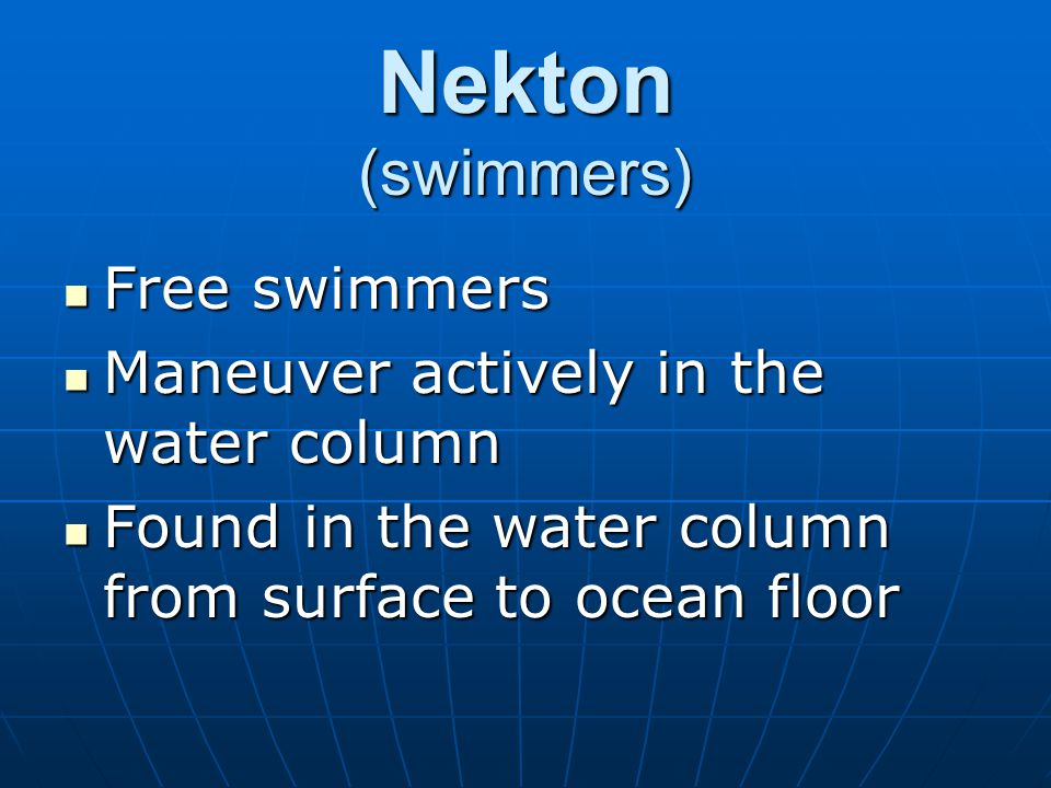 Nekton (swimmers) Free swimmers Free swimmers Maneuver actively in the water column Maneuver actively in the water column Found in the water column fr
