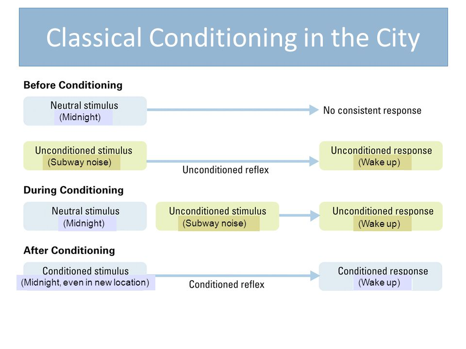 Classical Conditioning in the City (Midnight) (Midnight, even in new location) (Midnight) (Subway noise) (Wake up)