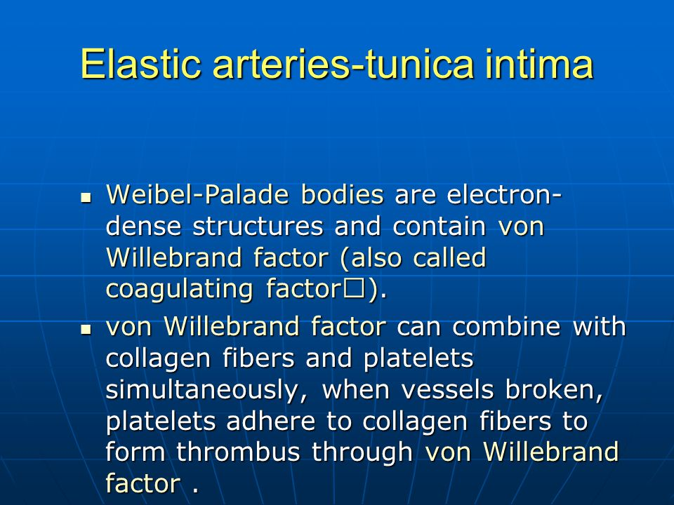 Elastic arteries-tunica intima Weibel-Palade bodies are electron- dense structures and contain von Willebrand factor (also called coagulating factor Ⅷ