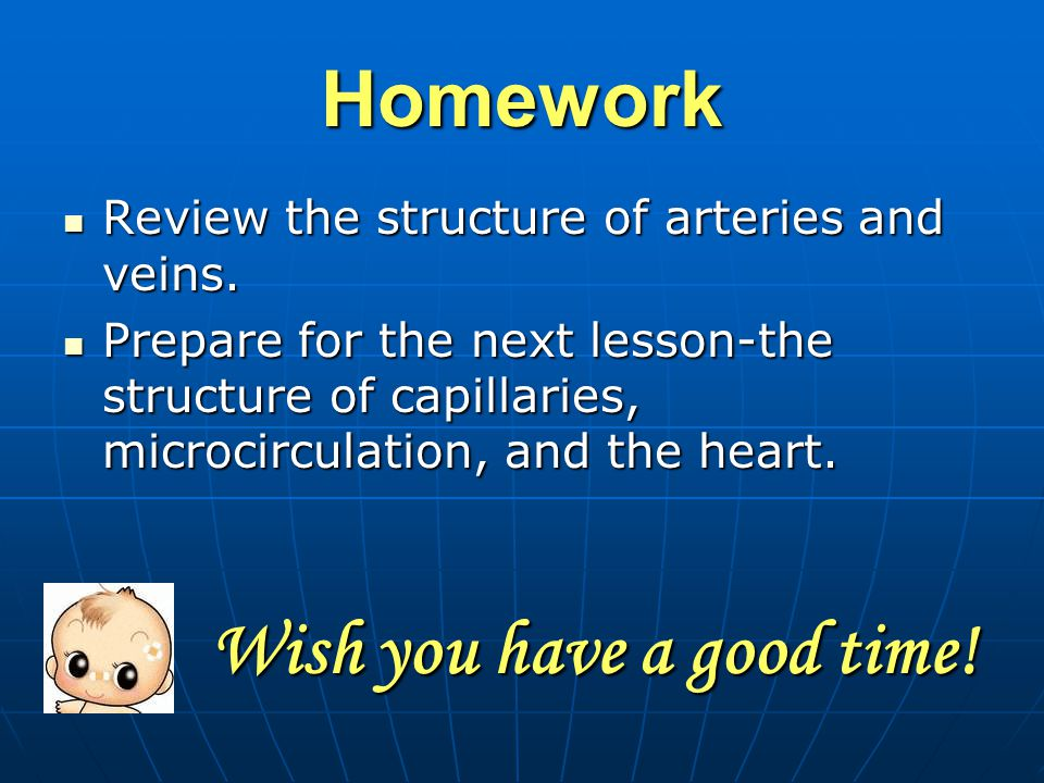 Homework Review the structure of arteries and veins.