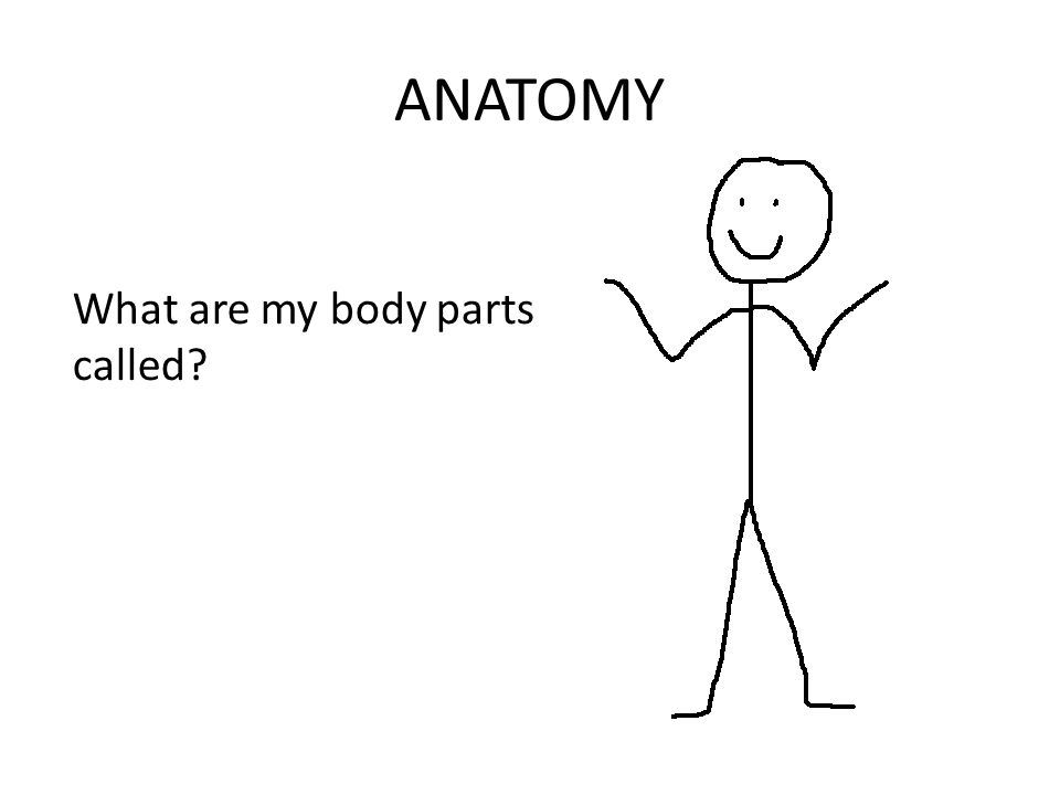 ANATOMY What are my body parts called?