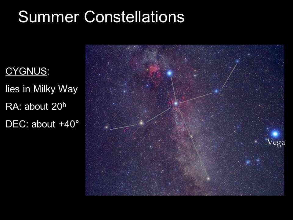 Summer Constellations CYGNUS: lies in Milky Way RA: about 20 h DEC: about +40° Vega
