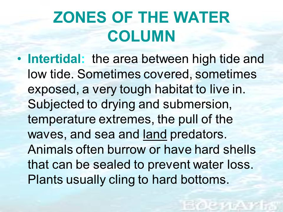 ZONES OF THE WATER COLUMN Intertidal: the area between high tide and low tide.