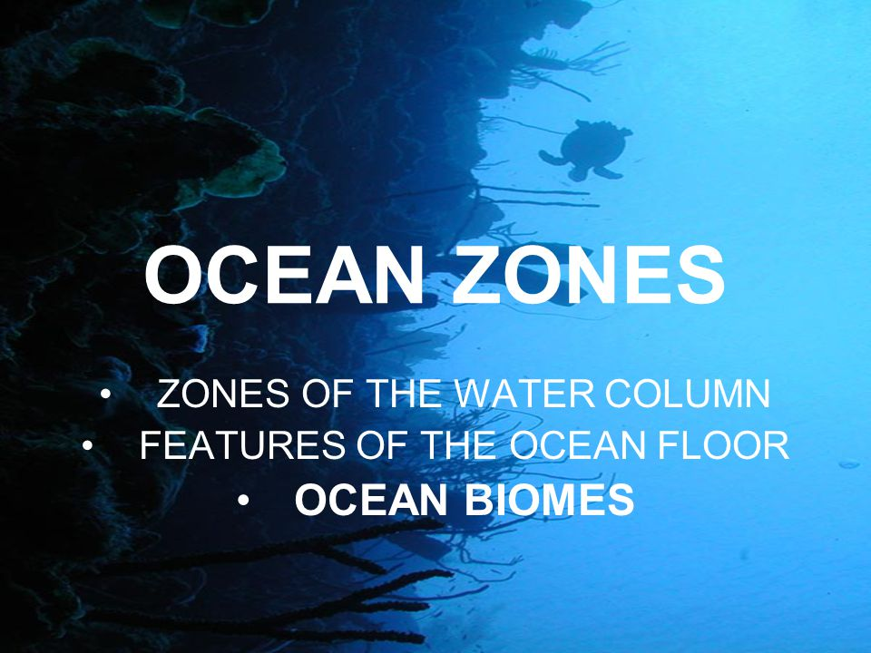 OCEAN ZONES ZONES OF THE WATER COLUMN FEATURES OF THE OCEAN FLOOR OCEAN BIOMES