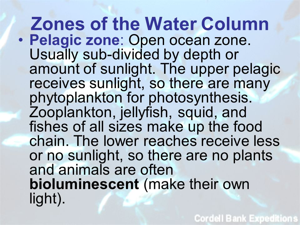 Zones of the Water Column Pelagic zone: Open ocean zone.