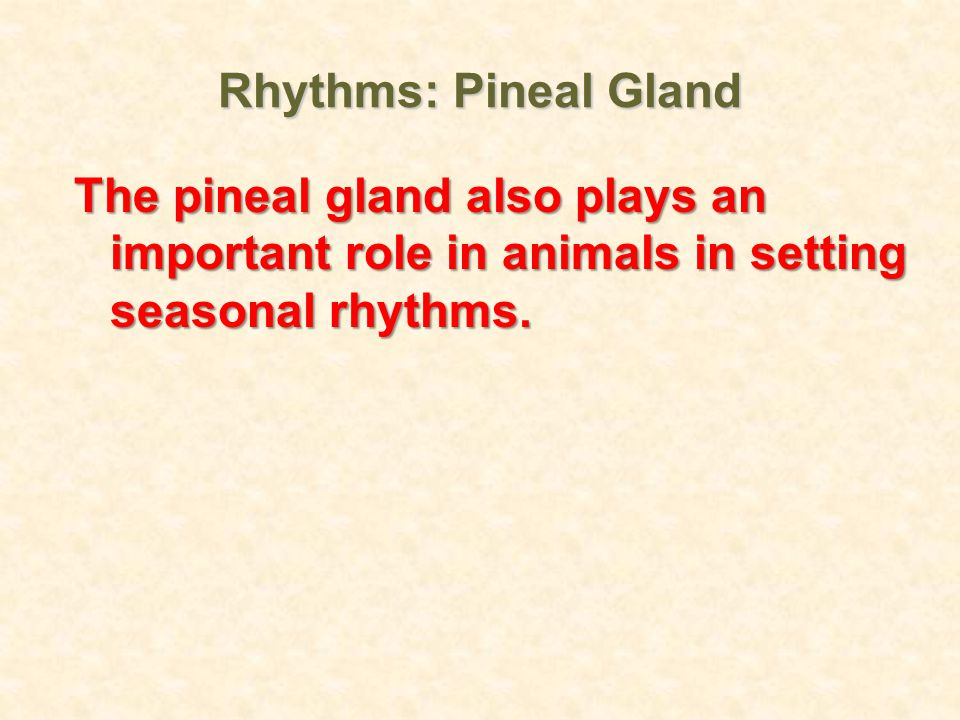 Rhythms: Pineal Gland The pineal gland also plays an important role in animals in setting seasonal rhythms.