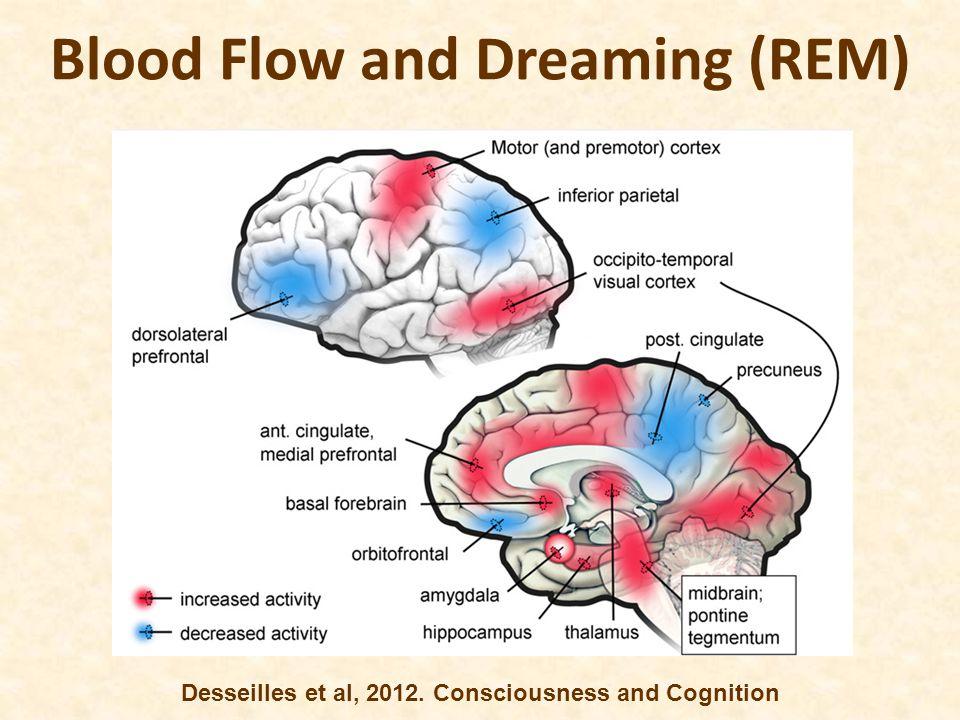 Blood Flow and Dreaming (REM) Desseilles et al, 2012. Consciousness and Cognition