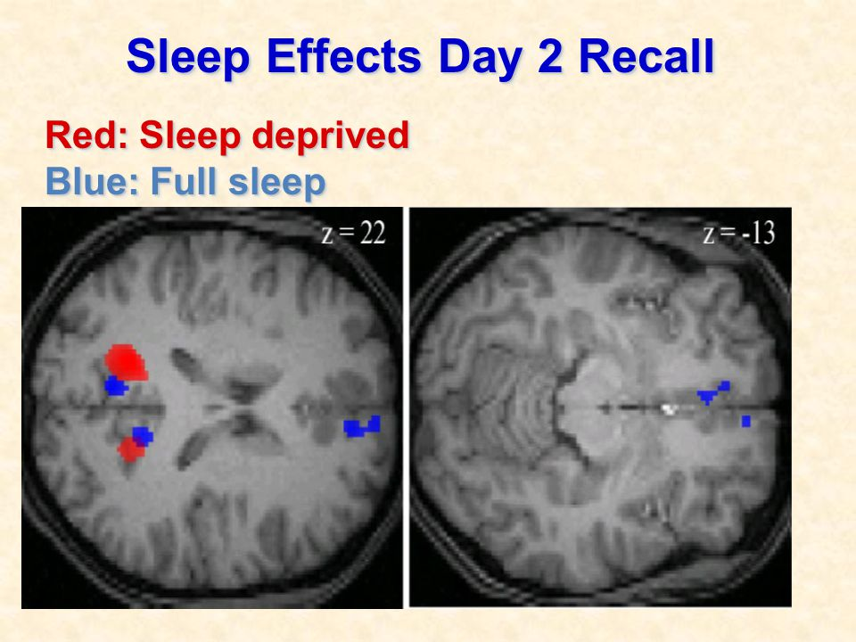 Sleep Effects Day 2 Recall Red: Sleep deprived Blue: Full sleep Sleep Effects Day 2 Recall Red: Sleep deprived Blue: Full sleep