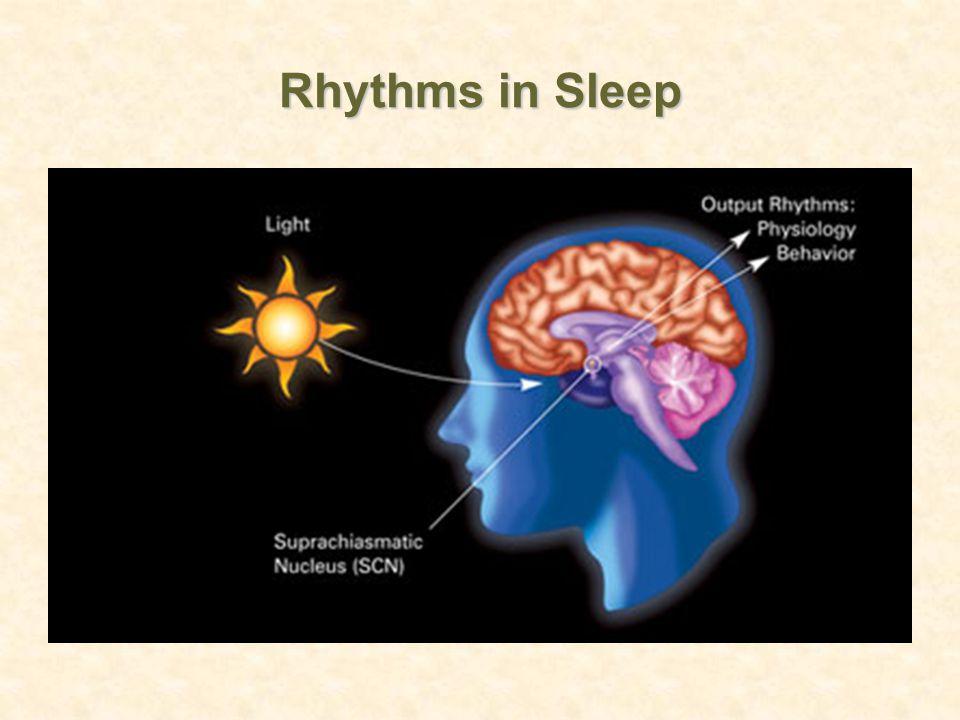 Rhythms in Sleep