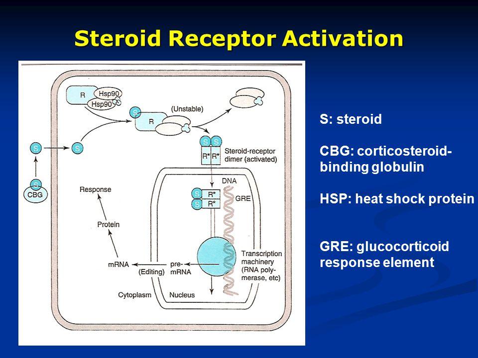 Steroid Receptor Activation S: steroid CBG: corticosteroid- binding globulin HSP: heat shock protein GRE: glucocorticoid response element