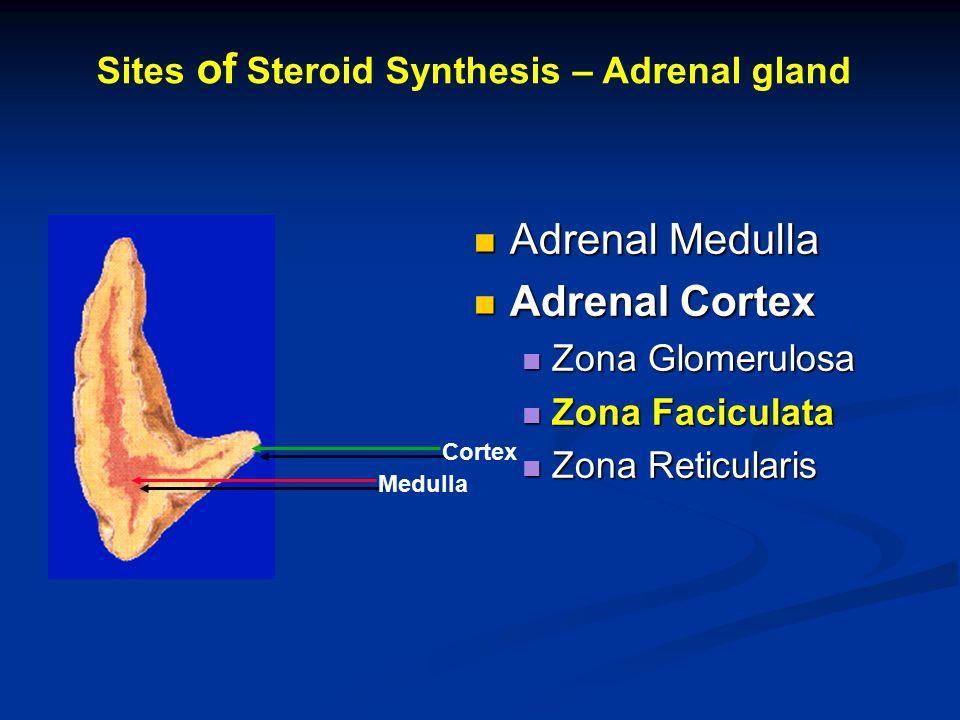 Adrenal Medulla Adrenal Medulla Adrenal Cortex Adrenal Cortex Zona Glomerulosa Zona Glomerulosa Zona Faciculata Zona Faciculata Zona Reticularis Zona