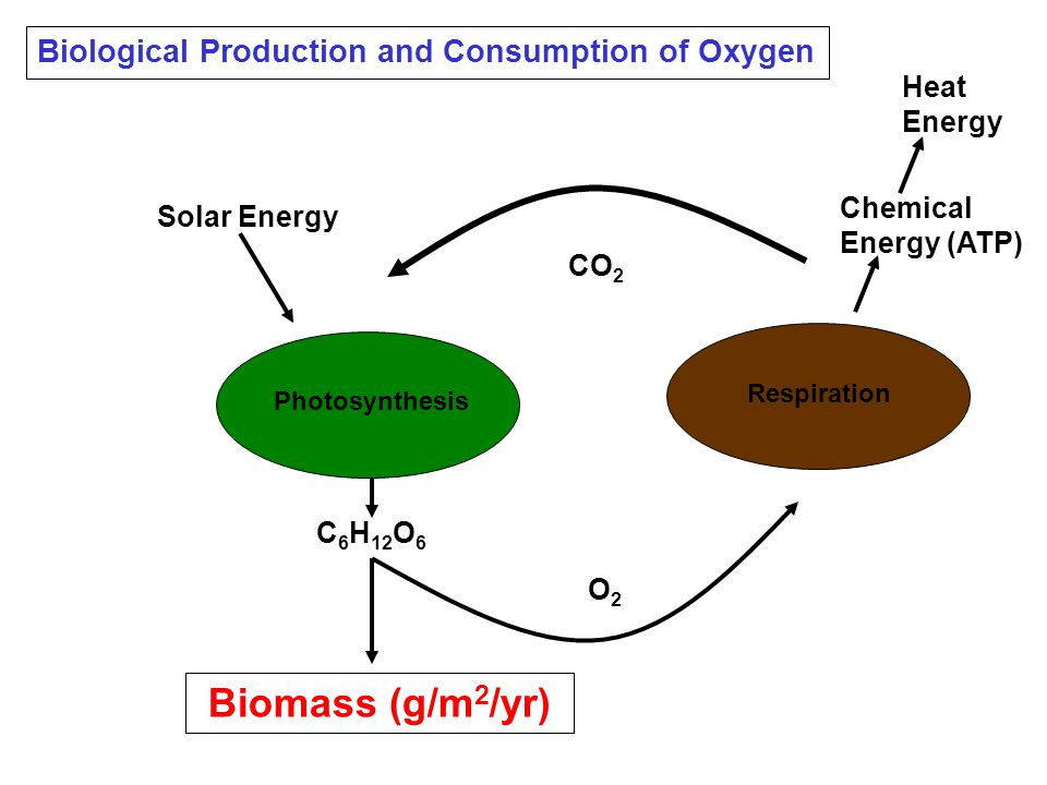 C 6 H 12 O 6 Solar Energy Heat Energy Biomass (g/m 2 /yr) O2O2 Chemical Energy (ATP) Photosynthesis Respiration Biological Production and Consumption of Oxygen