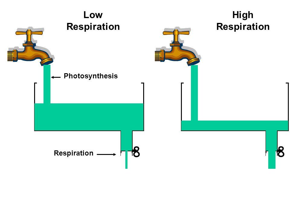 ∞ Photosynthesis Respiration ∞ Low Respiration High Respiration