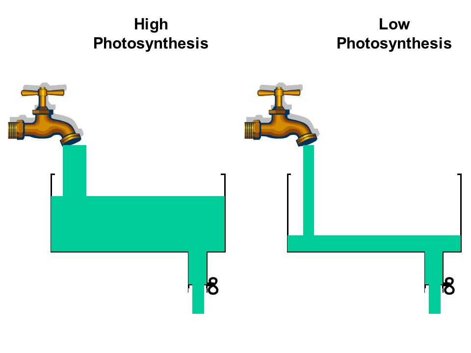 ∞∞ High Photosynthesis Low Photosynthesis