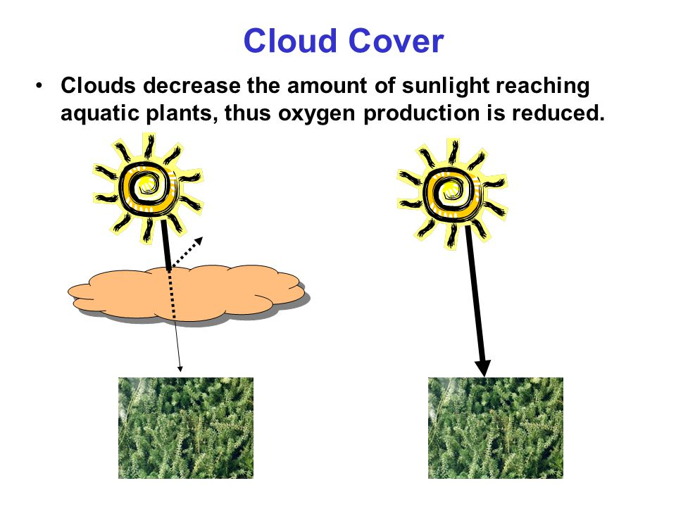 Cloud Cover Clouds decrease the amount of sunlight reaching aquatic plants, thus oxygen production is reduced.