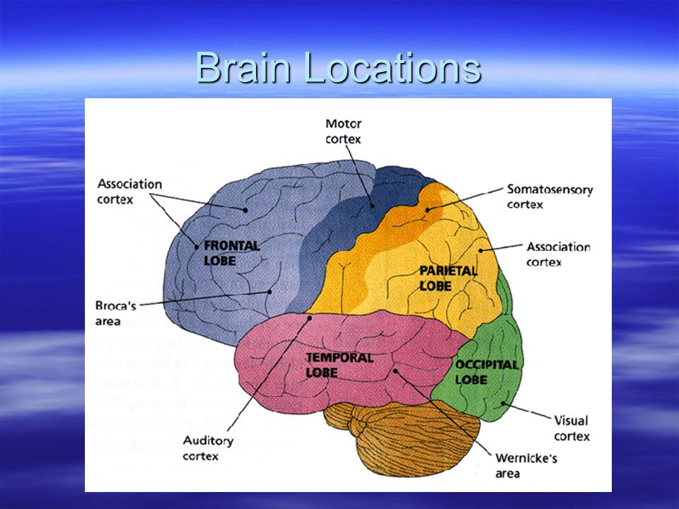 Brain Locations