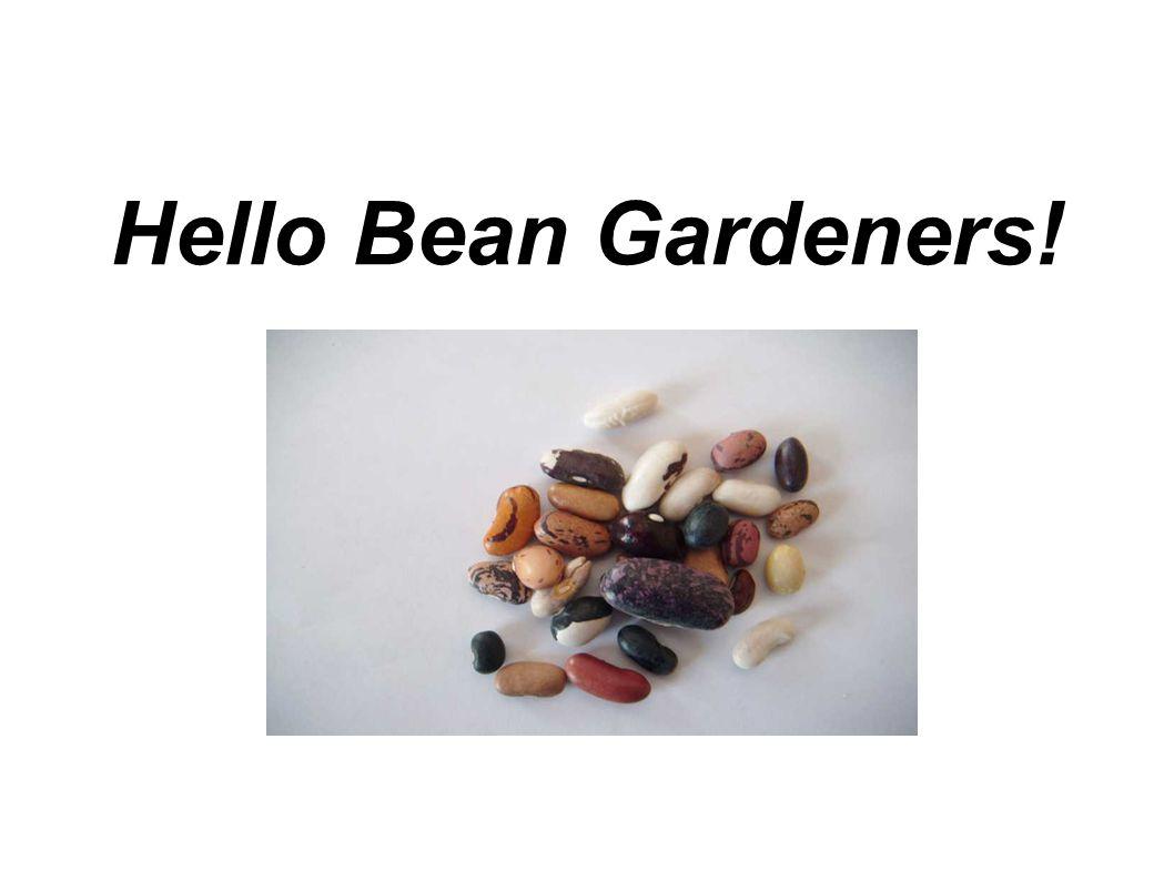 Hello Bean Gardeners!